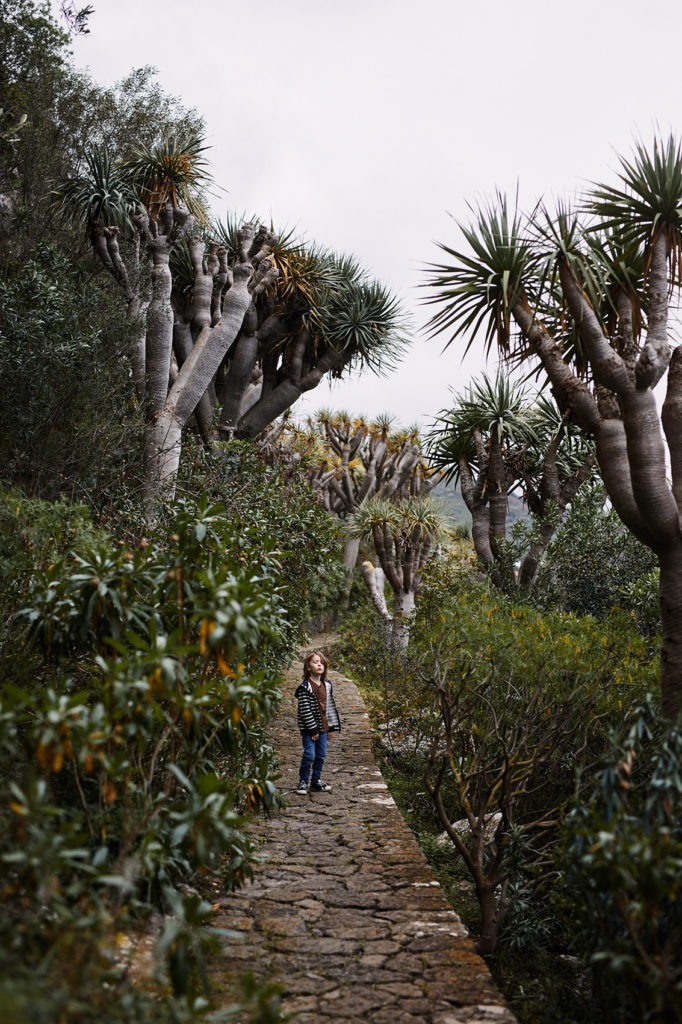 jardin canarinio ogrod botaniczny gran canaria