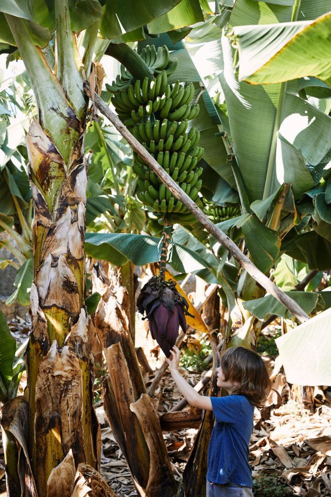 plantacje bananow gran canaria
